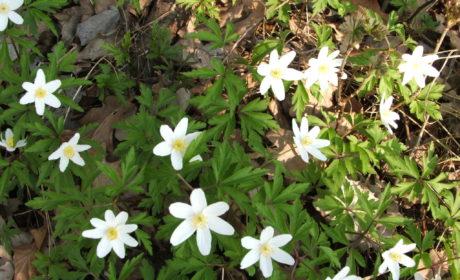 Wiosna, cz. 2